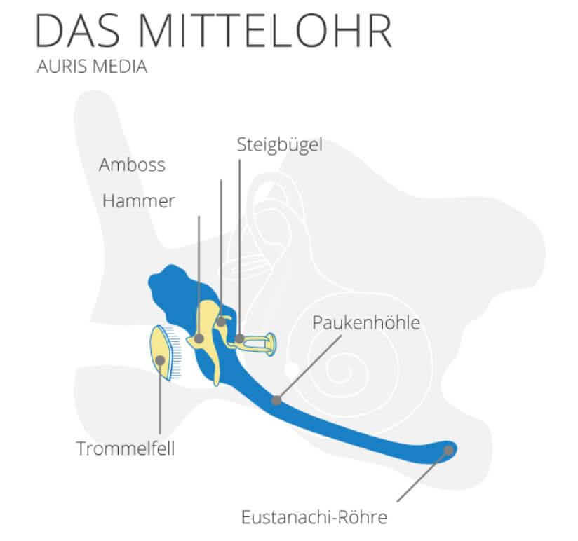 Mittelohr